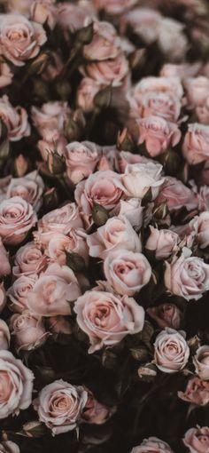 49+ Beautiful Rose iPhone Wallpaper (HD Quality)