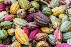 Cacao Farm tours Kauai fun things to do Chocolate World, Raw Chocolate, Madagascar Tourism, Cocoa Plant, Healthy Chocolate Desserts, Maui Activities, Food Test, Ubud, The Help
