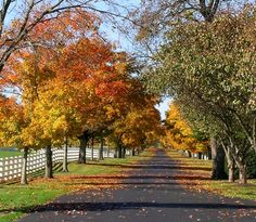 Ohio Horse Farm in Fall