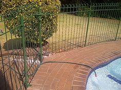 Image detail for -... around the pool, protection around your pool, swimming pool fencing