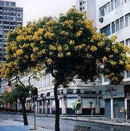 Árvores - Arte Vegetal Paisagismo - Curitiba