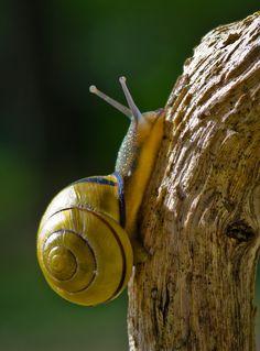 Snail ~ By Darrell Raw