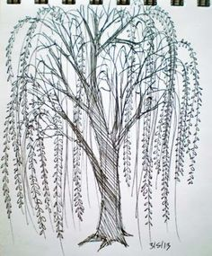 willowtreedrawing go back pix for simple willow tree drawing