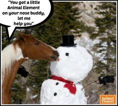 Nose licking good at Christmas.. Love my Animal Element Detox.