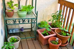 How to Grow Vegetables in Pots-No Yard Required!  Come on over to Old Time Pottery Garden Centers to get started!  http://www.oldtimepottery.com/ Home Food, Growing Vegetables, Great Recipes, Frugal, Veggies, Home And Garden, Deer, Comment, Pots