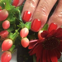 This mornings stunning colour is #scandalous from Hand & Nail Harmony and NailHarmonyUK/Gelish. This is my personal favourite red.
