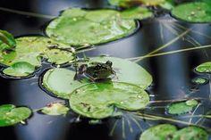 Providing water in your backyard habitat