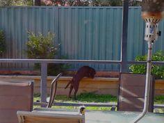 colourbond fence