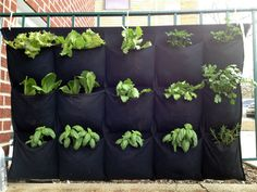 The Hanging Herb Garden