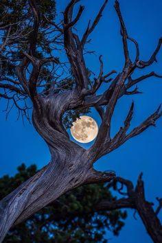 The soft green earth grows a crooked tree with a bright blue moon for all to see.