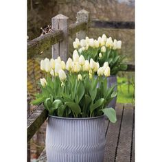 I have just purchased Tulip 'Purissima' from Sarah Raven - http://www.sarahraven.com/flowers/bulbs/tulips/tulip_purissima.htm