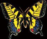 Wm Spear Swallowtail Butterfly Pin from Butterfly Buzz. Butterfly Pin, Small Art, Enamel, Color, Beautiful, Vitreous Enamel, Enamels, Colour, Colors