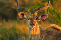SANParks responds to COVID 19 pandemic as it hits closer to home Augrabies Falls, Elephant Park, Hits Close To Home, Wetland Park, Save Wildlife, Kruger National Park, Wilderness, South Africa, Giraffe