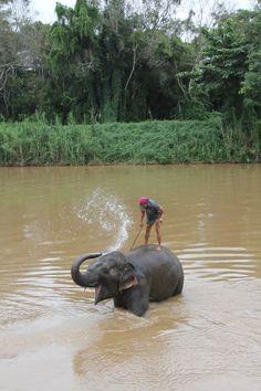 Swimming with Elephants - Chiang Rai Thailand