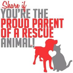 I am a Responsible Breeder and Person. I Breed, I require Spay & Neuter and I Rescue. And I pray that all of the Abused animals will be in heaven, so that I can give them LOVE.