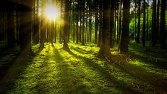 Forest Bathing Therapy (Shinrin-Yoku) Benefits for Health - EverPhi Aarhus, Post Hotel, Belle Image Nature, Success Images, 12 Volt Led, Shinrin Yoku, Concours Photo, Forest Bathing, Angst
