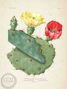 Texas Prickly Pear Poster I made to hang in our room.