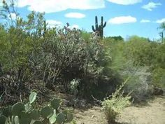Plants and People of the Sonoran Desert Loop Trail