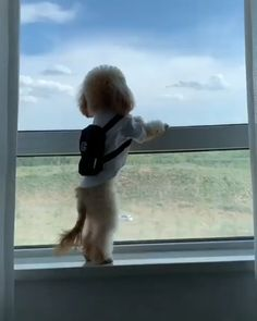 Come and see this view Carl. I said the view silly. Funny Animal Videos, Cute Funny Animals, Funny Animal Pictures, Animal Memes, Cute Baby Animals, Funny Cute, Animals And Pets, Funny Videos, Aussie Puppies