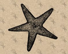 Vintage image Ocean Life Starfish retro drawing Instant Download black and white clipart digital printable graphic decor prints  HQ 300dpi by UnoPrint on Etsy