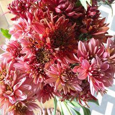 Heirloom mums Fall Wedding Flowers, Autumn Wedding, Fall Arrangements, The Dreamers, Annie, Planting Flowers, Knot, November, Herbs