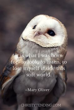 """""""It is what I was born for–to look, to listen, to lose myself inside this soft world."""" – Mary Oliver"""