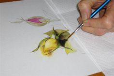 Color Pencil Drawing Tutorial Water Color Pencil Roses Tutorial - Step by Step - Total Art Soul - Forum Watercolor Tips, Watercolour Tutorials, Watercolor Pencils, Watercolor Techniques, Watercolor Flowers, Watercolor Paintings, Painting Techniques, Painting Lessons, Art Lessons