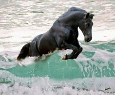 Horse Jumping a Wave