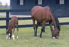Won't Tell You, dam of Affirmed, one of several famous mothers featured on our blog post for Mother's Day. www.thetonyleonardcollection.com