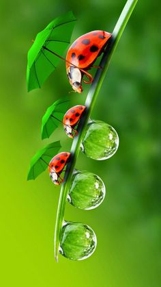 Ladybug Family Wallpaper by Sarchotic - 85 - Free on ZEDGE™