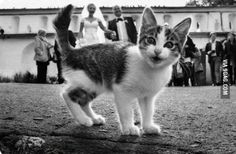 Cat photobombs a wedding picture. It seems very pleased with itself