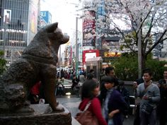 The Hachikō statue outside Shibuya Station, a dog who belonged to a Tokyo University professor in the 1920s. Every day, the professor would go to work, and every day Hachiko would meet his master at Shibuya Station to walk home with him. One day the professor suffered a cerebral hemorrhage at work and died, never meeting Hachikō at his usual time at the station...Hachikō attracted the attention of other commuters. Many of the people who frequented the Shibuya train station had seen Hachikō a...