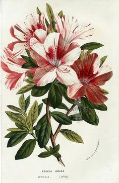 Gallery.ru / Фото #56 - Анатомия растений 1 - lanaluz