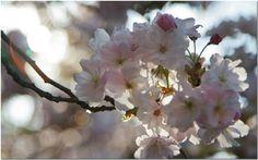Arne Olivier Fotografie : Spring