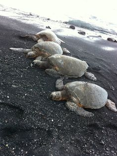 black sands beach. big island hawaii