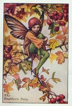 Autumn Fairies - The Hawthorn Fairy