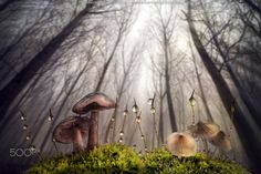 Small and Giant Creatures of the Forest by Alberto Ghizzi Panizza ~ Kuchi FM Fotos Macro Photography, Amazing Photography, International Photography Awards, Photo Awards, Photo Contest, Nature Photos, Siena, Beautiful Images, Cool Photos
