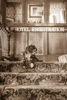 Tyler Foote at The National Hotel in Nevada City, California.  Photographed by Mara Casey, 9.16.14