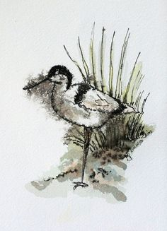 Shore bird watercolor original animal art 4 1/2 x by ruthsartwork, $50.00