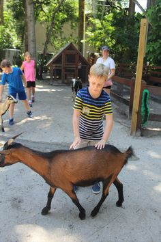 Pet and feed our animals with some up close time in our Petting Zoo! Sarasota Jungle Gardens, Petting Zoo, Zoo Animals, Goats, Goat