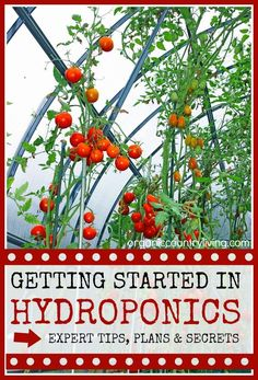 Getting Started in Hydroponics. Tips, tricks, secrets and plans. #gardening #hydroponics