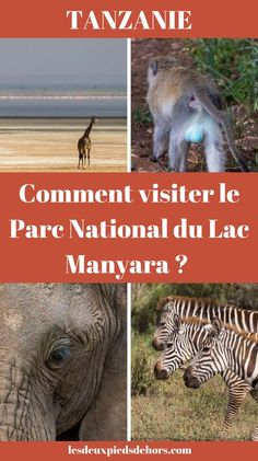 Un safari en Afrique ? En Tanzanie ? On en rêve tous ! J'ai eu l'occasion de découvrir le Parc national du Lac Manyara, au Nord du pays. Superbe. Elephant, hyène, giraffe, flamand rose, singe, etc. Toute la faune est déjà présente dans ce parc !