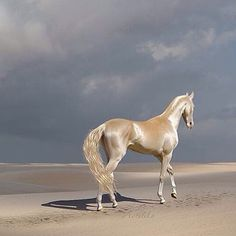This golden horse looks like he walked right out of heaven!
