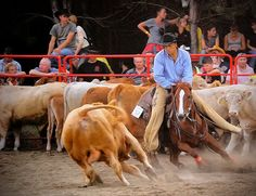 Cutting competition  ~  Notice how the horse's front legs are exactly in line with the cow's? That's a good cutting horse.  ~  great photo by Imre Botos