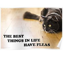 The Best Things In Life Have Fleas Poster