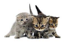 Tableau décoratif de quatre chatons tout mignons !