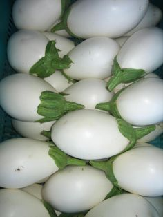 Organic White Eggplants from Finca La Calabacera in Canary Islands. Get your weekly box of delicious heirloom vegetables sent to you!