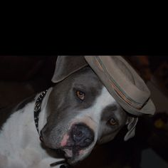 Boone; my sisters  handsome pit bull LoVe... his heart is as big as his huge head!