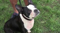 Adorable Rescue Dogs & Heartwarming Stories- Woofstock 2013