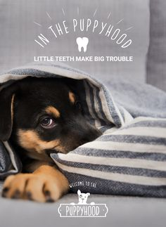 """Biting or nipping is normal behavior for your puppy, but it should be stopped as soon as possible. Train your little guy or girl that biting is bad by ignoring, going limp and saying """"ouch"""" when they begin biting you."""